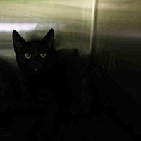Adopt A Pet :: A1714845 - Los Angeles, CA