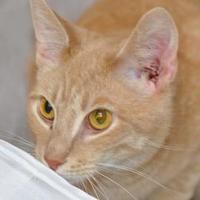 Adopt A Pet :: Lenny - Tilton, IL