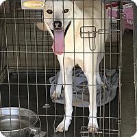 Adopt A Pet :: Jill - Denver City, TX