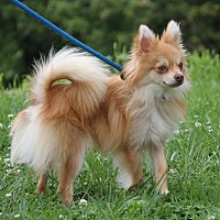 Adopt A Pet :: Oscar - Marietta, OH