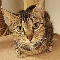 Adopt A Pet :: Maria - Grayslake, IL