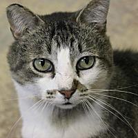 Adopt A Pet :: Kyle - New Richmond,, WI