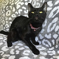 Adopt A Pet :: Egypt - Addison, IL