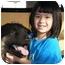 Photo 3 - German Shepherd Dog Mix Dog for adoption in Lombard, Illinois - Luke