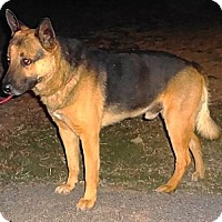 Adopt A Pet :: TONKA - SAN ANTONIO, TX