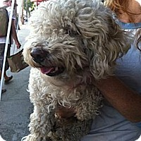 Adopt A Pet :: Winky - North Hollywood, CA