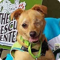 Adopt A Pet :: Leela - Mission Viejo, CA