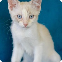 Adopt A Pet :: Joplin - Redondo Beach, CA