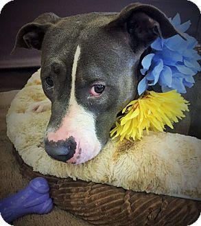 Terrier (Unknown Type, Medium) Mix Dog for adoption in Flint, Michigan - Fendi