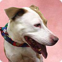 Adopt A Pet :: Purdy - Cincinnati, OH
