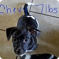 Adopt A Pet :: Chevy - Lorain, OH