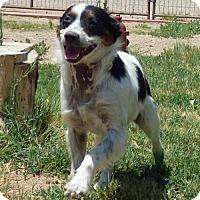 Adopt A Pet :: **HERMIONE - Peralta, NM