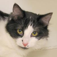 Adopt A Pet :: Princess Fleaa - Woodstock, IL