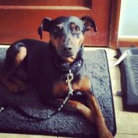 Adopt A Pet :: John Mayer - Redmond, WA