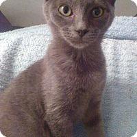 Adopt A Pet :: Bluebell - Morganton, NC