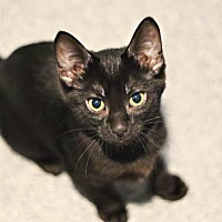 Adopt A Pet :: Scooter - Lincoln, NE