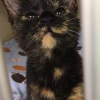 Adopt A Pet :: Glenda - Greensboro, NC