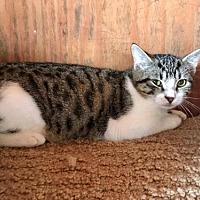 Adopt A Pet :: Durango - Freeport, FL