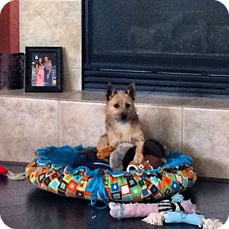 Terrier (Unknown Type, Small) Mix Dog for adoption in Rancho Cucamonga, California - Ginger