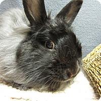 Adopt A Pet :: Michah - Newport, DE