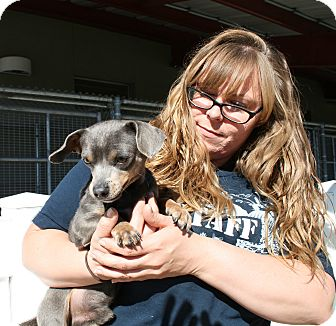 Chihuahua Mix Dog for adoption in Yucca Valley, California - Addien North Black