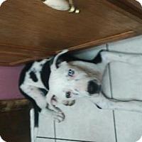 Adopt A Pet :: Tig - San Antonio, TX