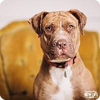 Adopt A Pet :: Reba - Portland, OR