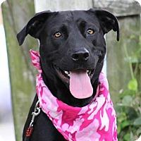 Adopt A Pet :: Marley - Pawling, NY