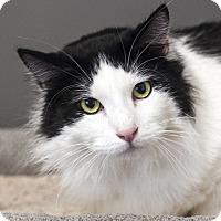 Adopt A Pet :: Bug - St Helena, CA