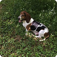 Adopt A Pet :: Dozer - Marietta, GA