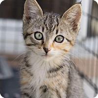 Adopt A Pet :: CAMI - Brea, CA