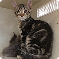 Adopt A Pet :: Hunter - Woodland Hills, CA