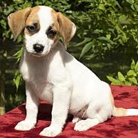 Adopt A Pet :: Dorito-Salty litter little guy - Santa Fe, TX