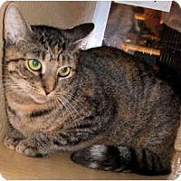 Adopt A Pet :: Tangi - Colmar, PA