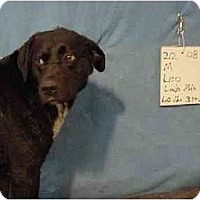 Adopt A Pet :: Leo/Adopted! - Zanesville, OH