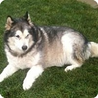 Adopt A Pet :: Honda - Sweet Girl! - Belleville, MI