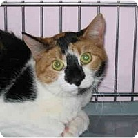Adopt A Pet :: Patches - Medway, MA