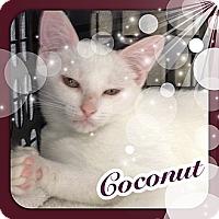 Adopt A Pet :: Coconut - Bradenton, FL