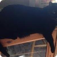 Adopt A Pet :: Poppy - Loveland, CO