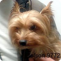 Adopt A Pet :: Nelson - Greencastle, NC