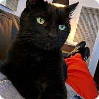 Adopt A Pet :: Indy - Dallas, TX
