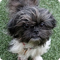 Adopt A Pet :: Chewy - Rockwall, TX