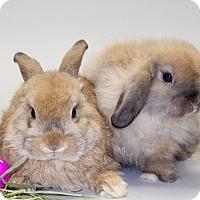 Adopt A Pet :: Puff and Fluff - Williston, FL