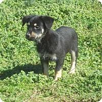 Adopt A Pet :: Tater pending adoption - Manchester, CT