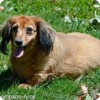 Adopt A Pet :: Ariana - Anaheim, CA