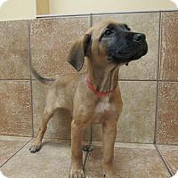 Adopt A Pet :: Dentyne *Petsmart GB* - Appleton, WI