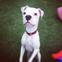 Adopt A Pet :: Declan - Tulsa, OK