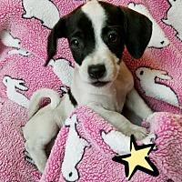 Adopt A Pet :: 7 DONNIE - Colton, CA