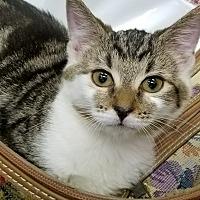 Adopt A Pet :: Chimes - Trevose, PA