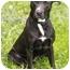 Photo 3 - Labrador Retriever Mix Dog for adoption in Chicago, Illinois - Raven